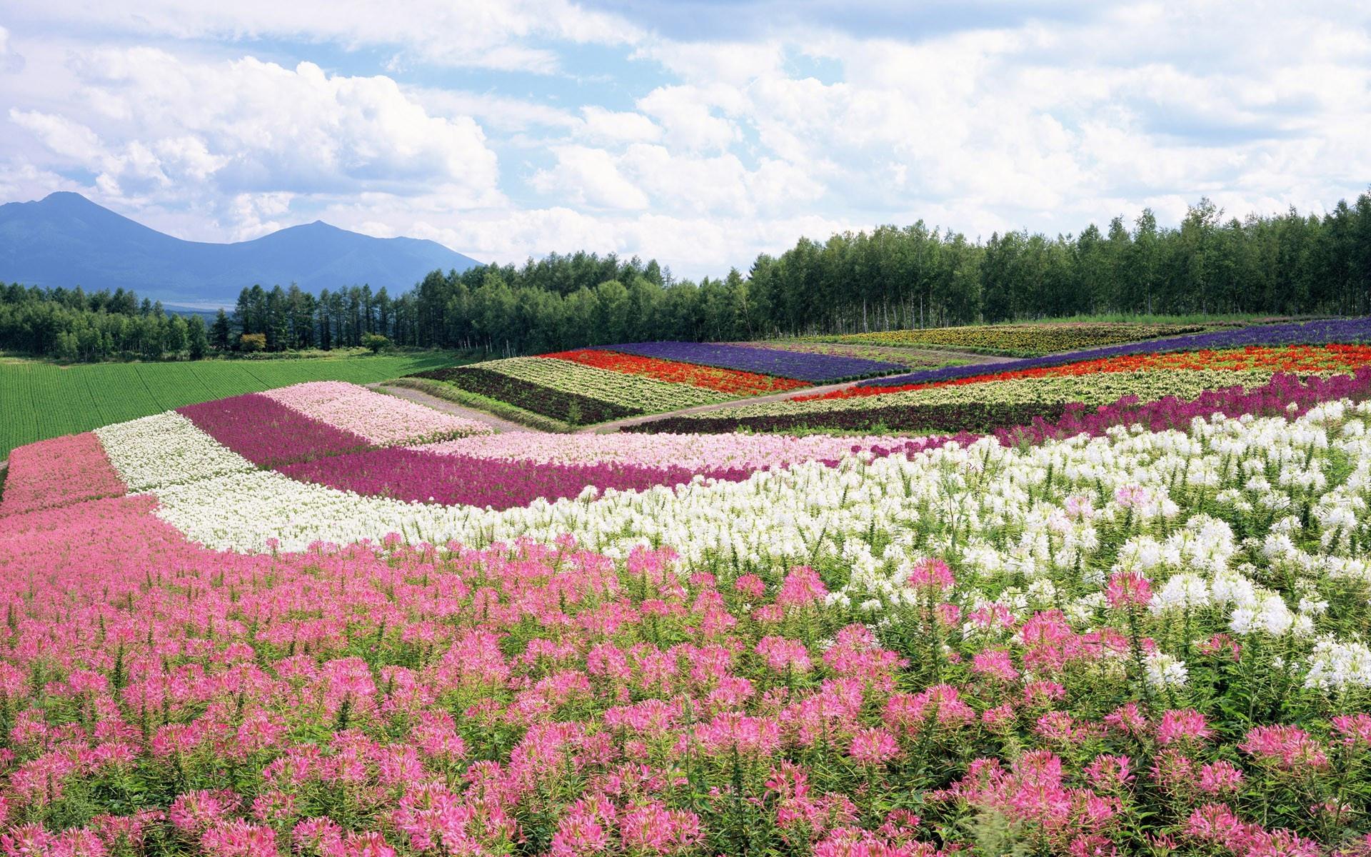 волосы пейзаж из роз фото наиболее